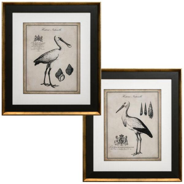 Set de 2 Quadros Antiquarian Flamingos