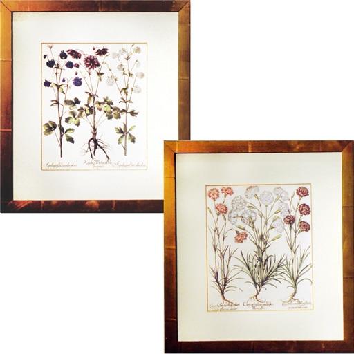 Set de 2 Gravuras Botânica P - A